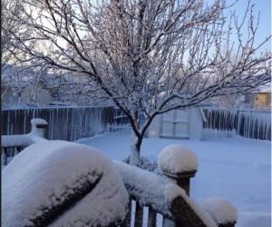 2-26-2013 snow