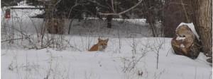 snow in kansas - fox