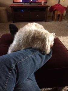 Comfy again